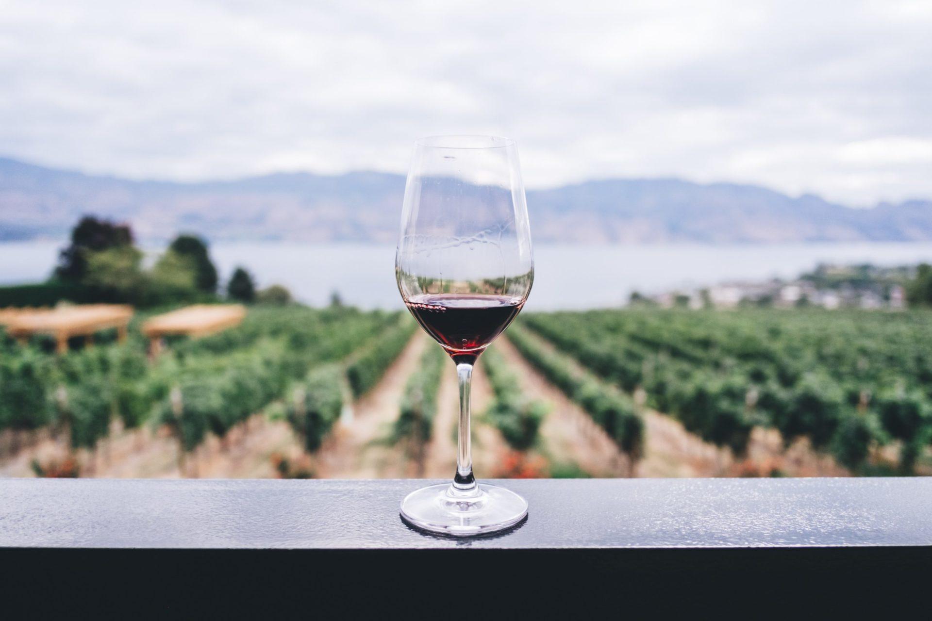 赤ワインの作り方をわかりやすく解説します!【ワイン入門編】