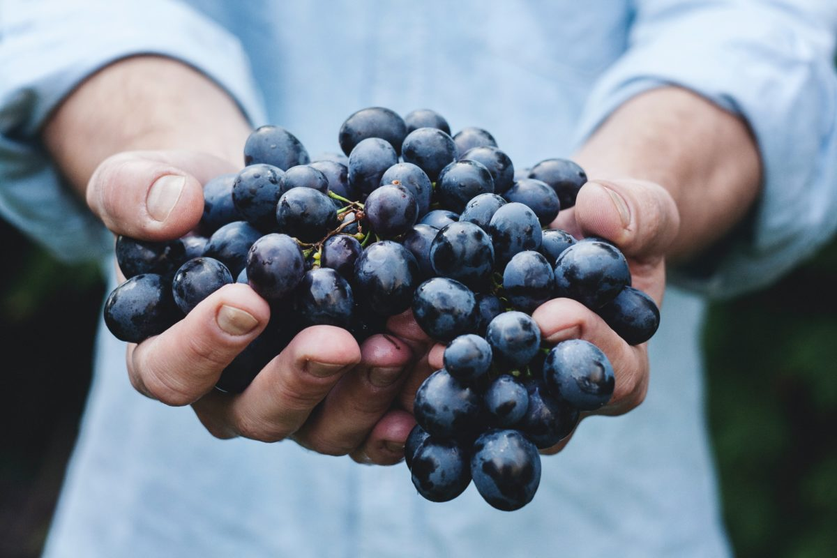 赤ワイン用の主要ブドウ品種10個とその特徴をわかりやすく解説します!【ワイン入門編】
