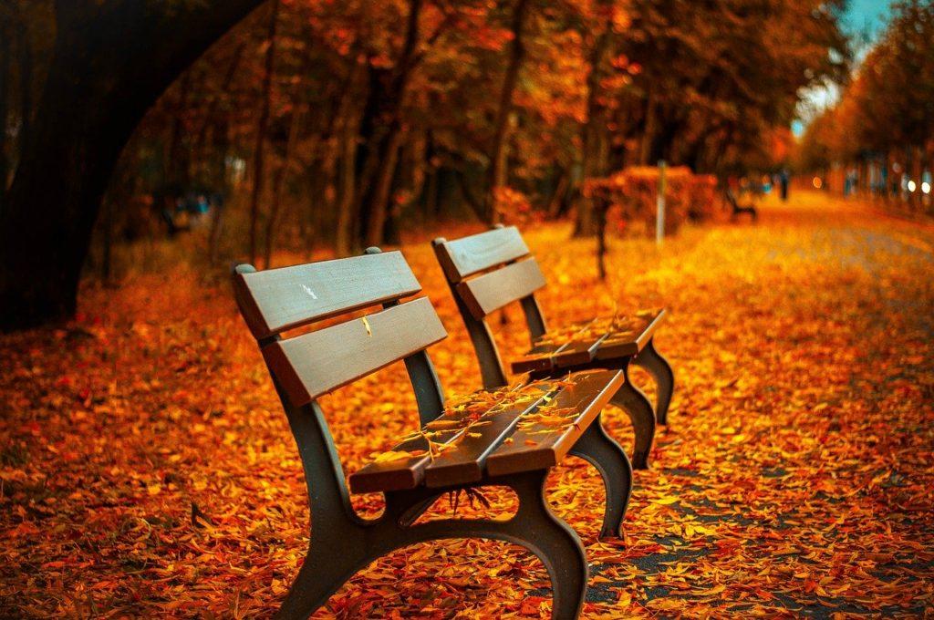 「秋」~豊かな食材、ワインが美味しくなる季節♪~