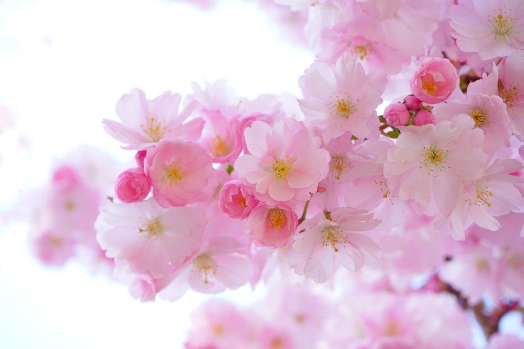 「春」~ぽかぽか陽気♪桜の美しい季節にはロゼワインが似合う~